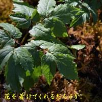 2017/04/24 我が家の庭