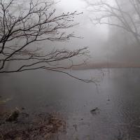 霧の乙和池:霧で浮島の様子がほとんど見えなくて残念でした。