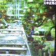 NHKスペシャル 戦後70年 ニッポンの肖像 世界の中で 第2回(全3回)