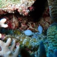 大寒ってさすがに寒い! 沖縄ダイビング 那覇シーマリン