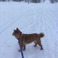 ソラもスキーと一緒に走ってみる?