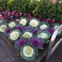 パートナーシップ花壇も、お正月。