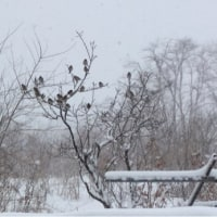 大雪となっています