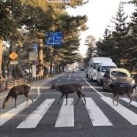 鹿に対抗して日本大通りのビートルズ