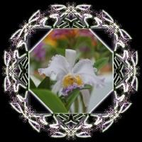 蘭祭り 1