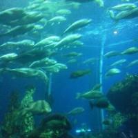 水族館、裏側探検