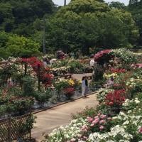 西山公園 ばら園