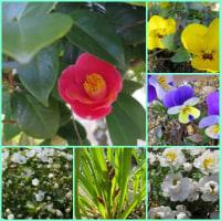 もうすぐ春ですね~!