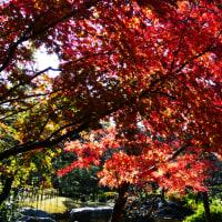 『旧吉田邸』 紅葉狩り(4)