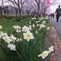 4月8日  三田 、猪名川