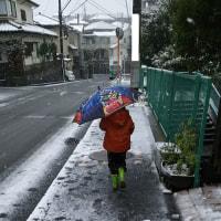 就学時検診✕雪