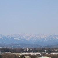 3月28日の市内の桜開花状況で~す