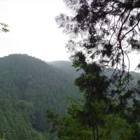 近郊への山紀行 岩湧山(大阪府・和歌山県境)を歩く