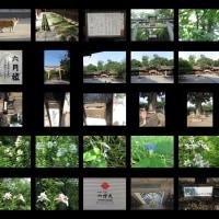 今日も リハビリウォーキング 北野天満宮&平野神社&真盛豆のルーツを探る