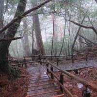 屋久島も雨だった。