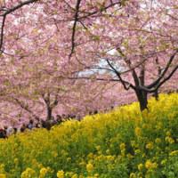 「外科室」というタイトルが満開の桜をバックに出てきます。