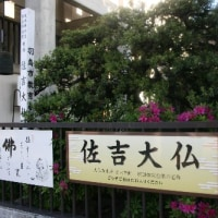 ё 昭和天皇さんも、見に来られたという、佐吉大仏、ドキドキ眺め ё (岐阜県羽島市)