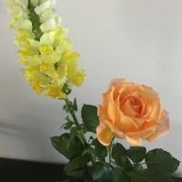 我が家の専属フローリスト A special florist of my house