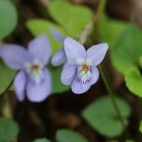 国道157号線の花たち