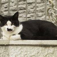 山手の親子ノラ猫