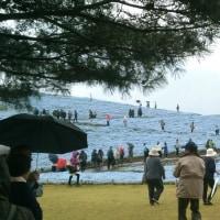 #111 -'17.    ネモフィラを満喫に@国営ひたち海浜公園