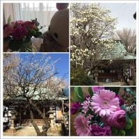 2017 クマルとお花見
