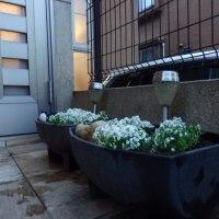 自宅花の植え替え(春夏)