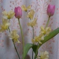 春気分♪(*´∇`)