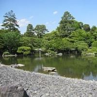 京都御所の右近の橘を見て愕然
