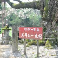 久留米 浅井の一本桜