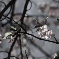 花景写真:桜、光彩々