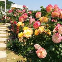 淡路島「奇跡の星の植物館」