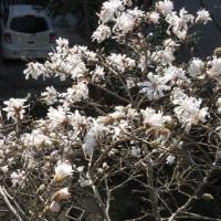 Springtime  has  come
