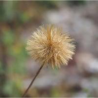 ★秋の里山でよく見る山野草(2)