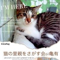 1月15日 猫の里親会です。