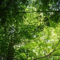 覚園寺の緑と天園の風を楽しんだ日