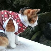 寒かねぇ〜