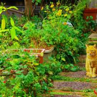 留守番の猫in山科区