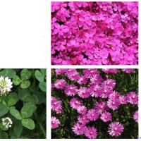 花壇色々 庭作り、土作りから 多年草