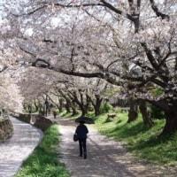 2015.4.15千本桜情報