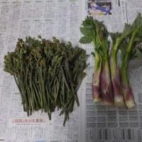 蕨煮て漸く春を堪能す