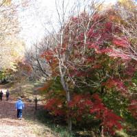 茨城県民の森