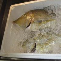 沖縄の思い出:名護のお魚屋さん