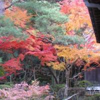 奈良公園・吉城園