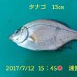 笑転爺の釣行記 7月12日☀ 久里浜・浦賀 タナゴ