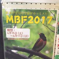 バードアイランドフェスティバル突入!!