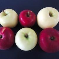 白いりんご