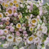 初夏の花がきれいです・・・