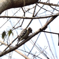 2月18日 今日撮影した鳥