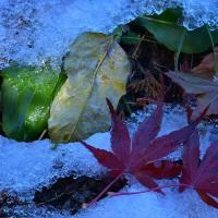 「残雪の彩り」 いわき 夏井川渓谷にて撮影! 落ち葉